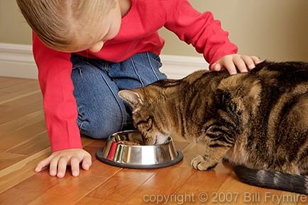 Картинки по запросу cat feeding